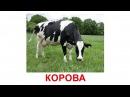 Картки Домана Домашні тварини українською