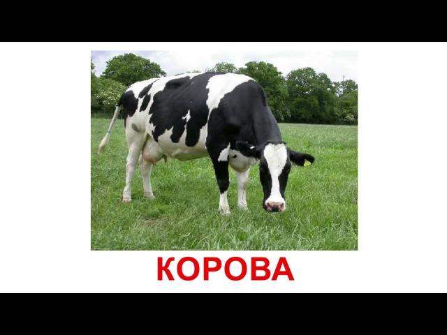 Картки Домана - Домашні тварини (українською)