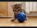Смешное видео про кошек 15, подборка 2013-2014