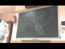 Нервная регуляция работы сердца - studentmedic.ru