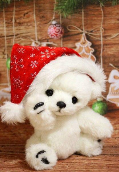 Мишка Алан готов к празднику (3 фото)