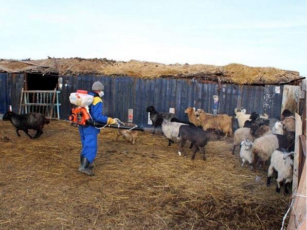 В Ростовской области ветеринарные врачи обработали против клещей 1,8 миллиона животных