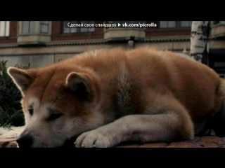 Hachiko: a dogs story