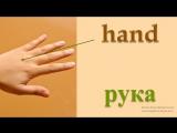 Части тела на английском языке. Пальцы рук.1
