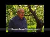Валерий Железов - Убийство любимых деревьев руками садоводов