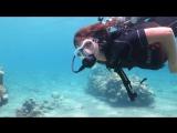 Dive in Eilat diving club Aqua Star