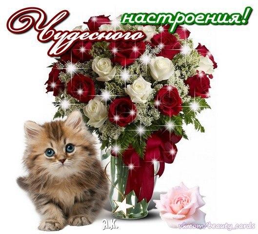 http://cs629100.vk.me/v629100982/afad/ul1PqrU3Qcg.jpg