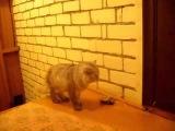 Doorbell for the cat  Дверной звонок для кота