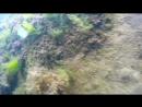 2015_0711_Крым. пляж Голубая волна. медузы,рыбки,