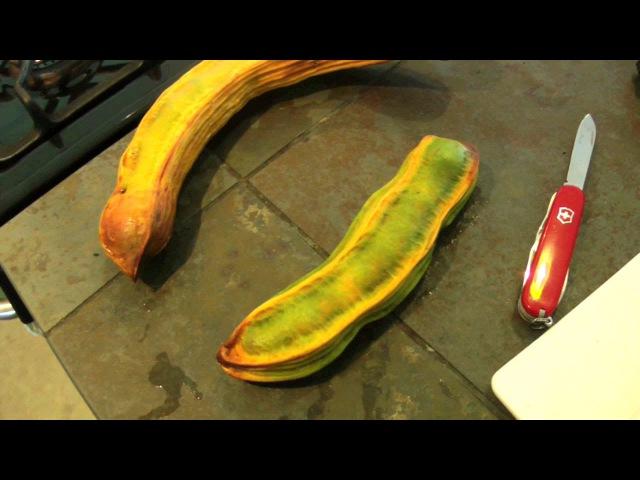 Cutting Open an Ice Cream Bean Fruit | Inga edulis | HD Video
