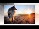 Русский размер - Человек собаке друг
