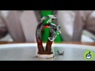 Эксперимент. Фараонова змея из глюконата кальция.