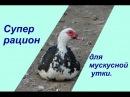 Супер рацион для мускусной утки. Raising Ducks.