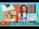 Как приучить щенка к пелёнке к туалету, как приучить к лотку собаку или кошку, советы Elli Di.
