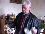 Тайная жизнь Чернобыля(DOC)