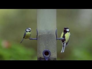 BBC Тайная жизнь птиц 05 Созданные для жизни в Уэльсе
