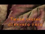 Тихая сказка осеннего леса. Музыкальное слайд - шоу.