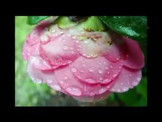 Музыка дождя— Видео Mail.Ru