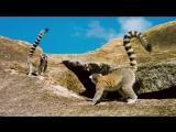 Остров лемуров: Мадагаскар (Island of Lemurs: Madagascar, 2014)