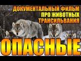 Опасные животные. Волки людоеды. Трансильания. Документальный фильм. HD 720p (04.01.2016)