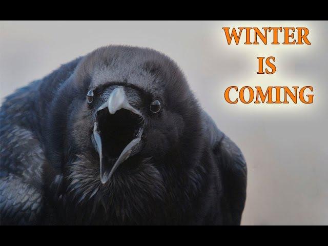 Antaras 21\01 «WINTER IS COMING» themega x20