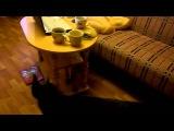 Доберман и пинчер