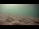 ◉Chatulim Al Sirat Pedalim(2011)Коты на водном велосипеде*реж.Юваль Мендельсон, Наддав Холландер