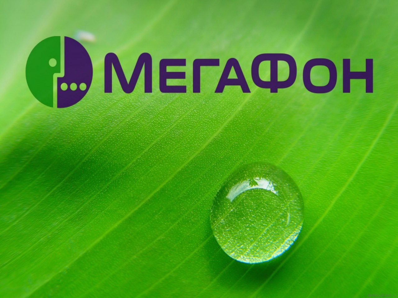 «МегаФон» дарит «серебряные» номера