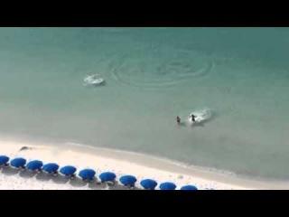 Акулы охотятся на пляже на отдыхающих