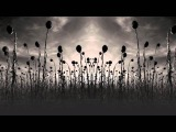 Dead Can Dance 'Amnesia' (Radio Edit)