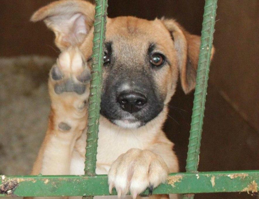 Ветеринарные инспекторы проверили работу общественной организации по защите животных в городе Шахты