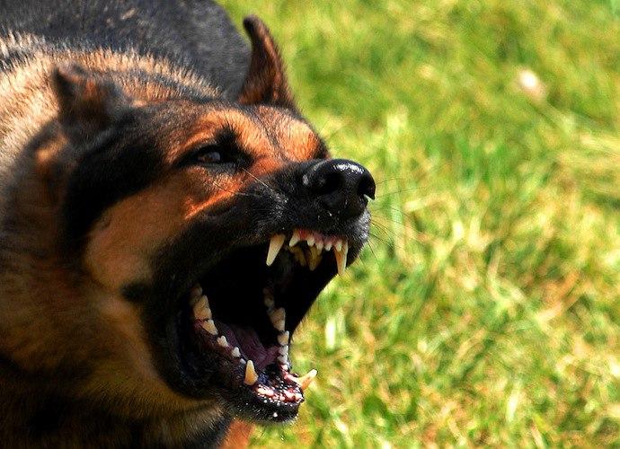 Под Таганрогом дворовая собака покусала мать с 7-летним ребенком
