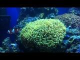 Finding Nemo Fish Tank Surprise
