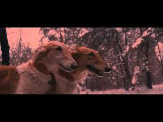 Dilara Kazimova - Running (Official Video Clip)