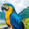 Попугаи и другие экзотические животные