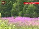 Нынешним летом собрать богатый урожай пчёлам помешала погода