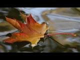 Журга ( Гала Журавлёва)   -  Осень на душе
