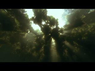 Амазонка в HD