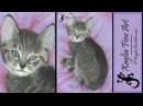 Speed drawing how to draw a kitten pet portrait in coloured pencil Xavier