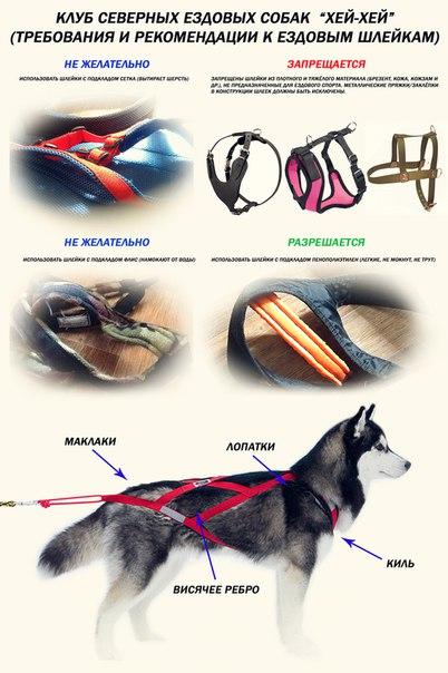 Как сделать шлейку ездовую для собаки своими руками фото