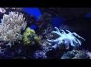 Музыка саксофон Ночной океан Морской риф Animals fish