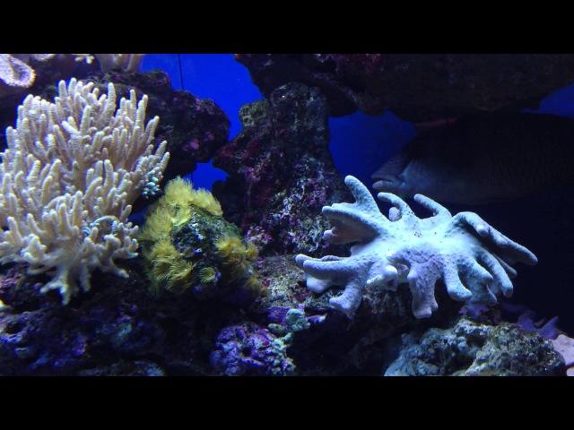 Музыка саксофон. Ночной океан. Морской риф. Animals fish.