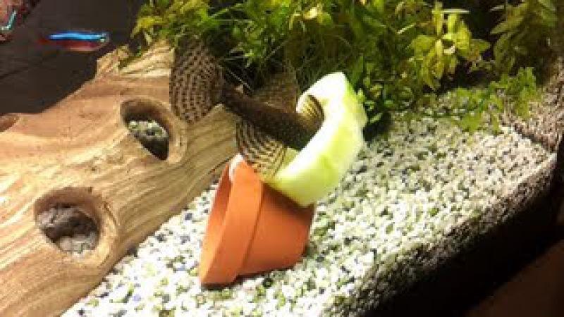 Fische mit Gurke füttern