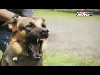 ВГосдуме хотят ввести «собачье ОСАГО»