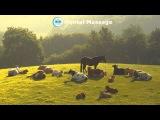Лето в деревне. Звуки природы, медитация, звукотерапия. Meditation, relaxation, sound therapy