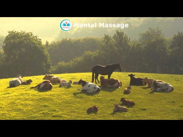 Лето в деревне Звуки природы медитация звукотерапия Meditation relaxation sound therapy