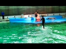 Дельфинарий.Моржиха Соня и белуха Полина(эпизод 2)