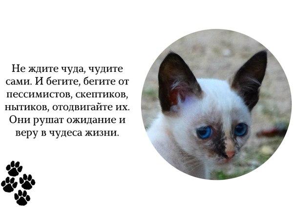 http://cs629109.vk.me/v629109992/6766/ztQiUHLSoKU.jpg