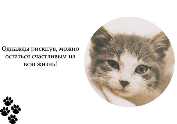 http://cs629109.vk.me/v629109992/6a5d/xduPnZcIdX8.jpg