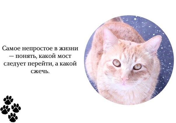 http://cs629109.vk.me/v629109992/6a6f/HEH1F_mLdqg.jpg